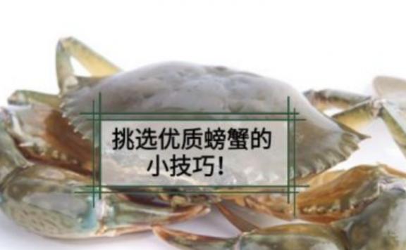 选蟹技巧|挑选优质螃蟹五看小技巧